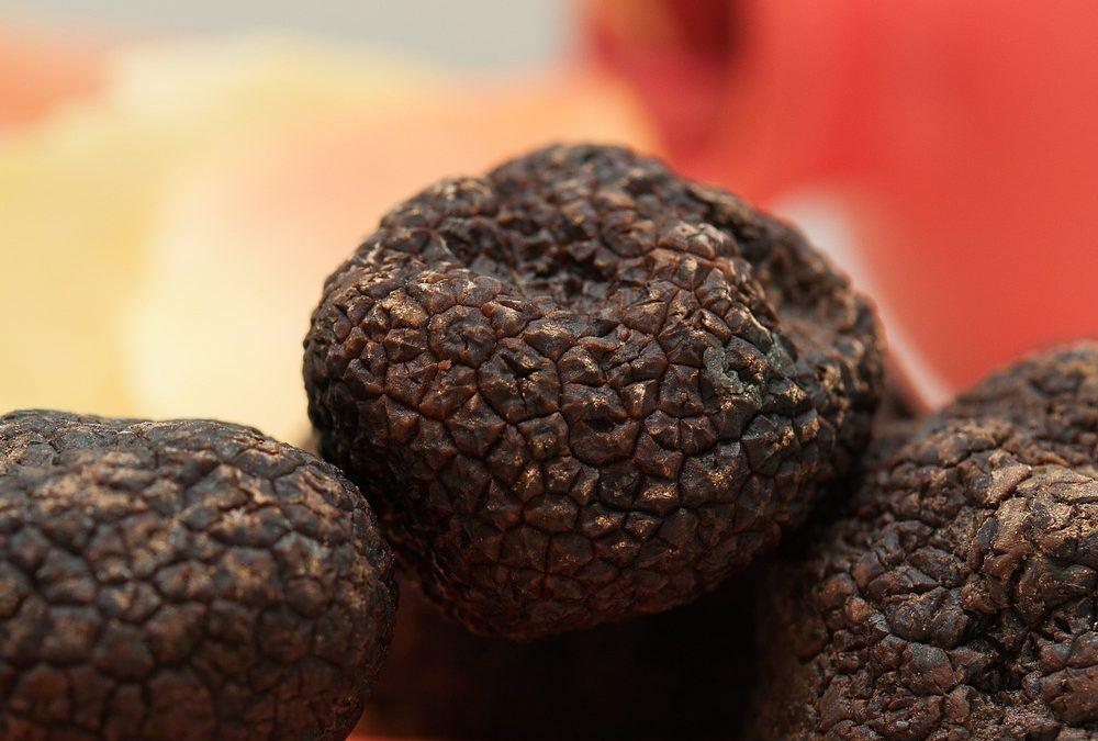 Tartufo nero uncinato: stagioni, caratteristiche e prezzi.