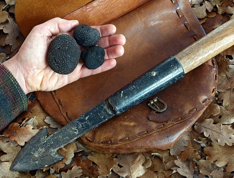 Tartufo nero pregiato: territorio, caratteristiche e uso in cucina