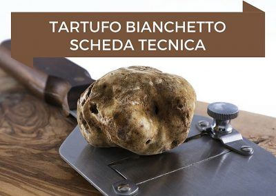 Tartufo Bianchetto