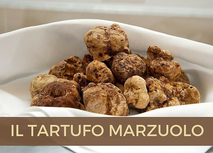 Tartufo Marzuolo o Bianchetto: la miniguida per conoscerlo.