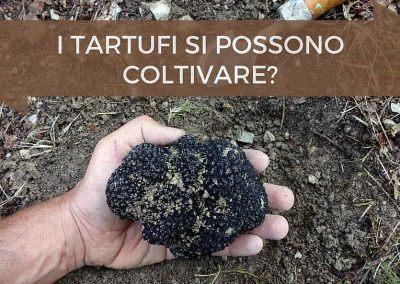 Coltivare tartufi