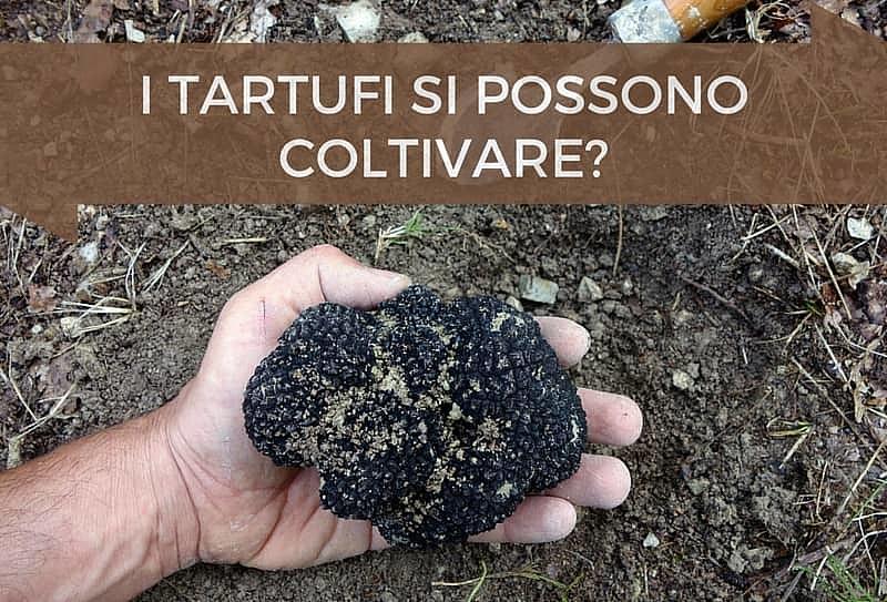 Coltivare tartufi: si può?