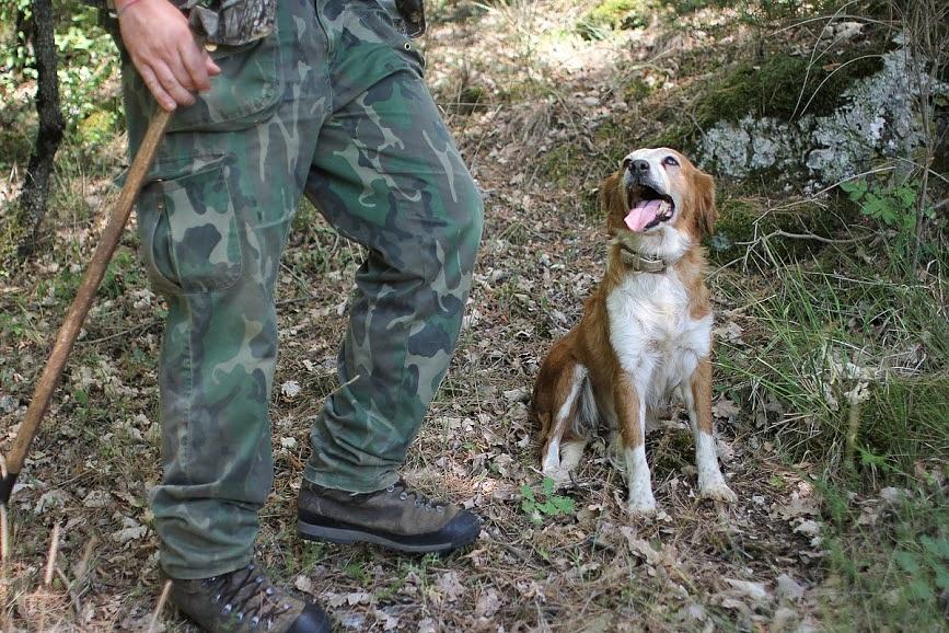 Tartufo Trail: vivi la caccia al tartufo in Umbria!
