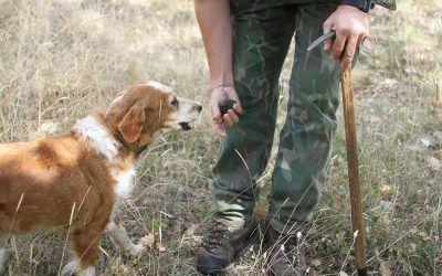 Cani da tartufo: quali sono le razze migliori e perché.