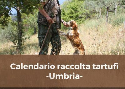 Calendario raccolta tartufi