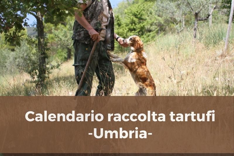 Calendario raccolta tartufi in Umbria: regole e divieti.